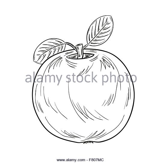 539x540 Cartoon Apple Half Stock Photos Amp Cartoon Apple Half Stock Images