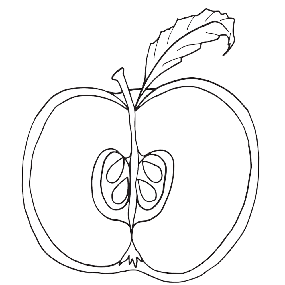 1000x1000 Parts Of An Apple Clipart