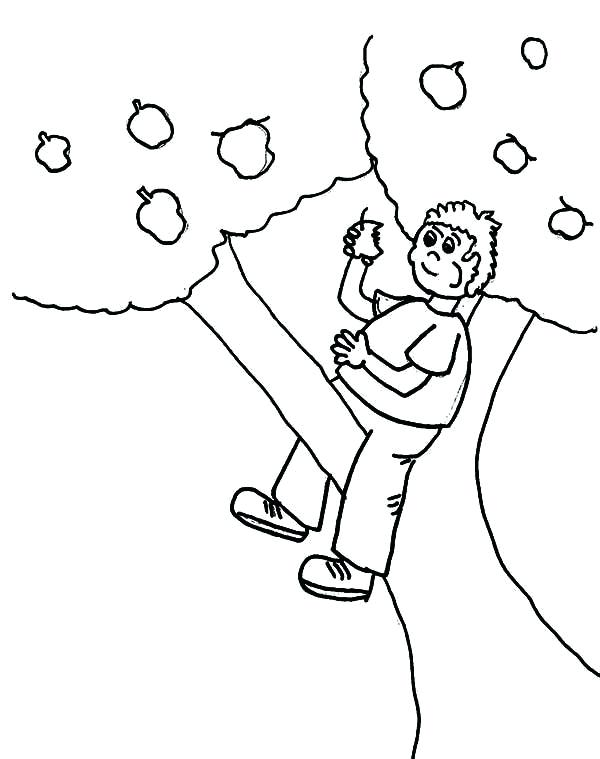 600x759 Apple Tree Pictures To Color Hand Drawing Apples On Apple Tree