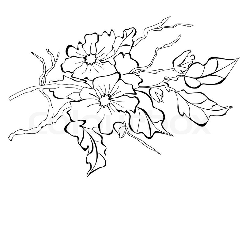 800x800 Blossoming Branch Of An Apple Tree Stock Vector Colourbox