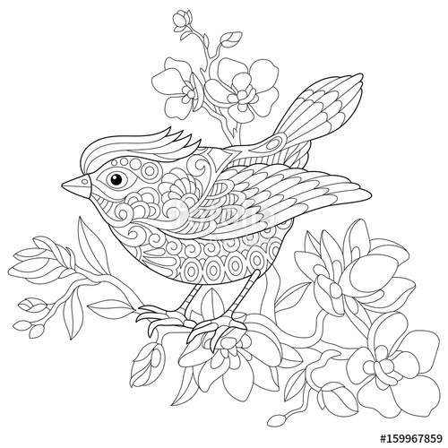 500x500 Coloring Book Page Of Sparrow Bird Sitting On Apple Blossoming