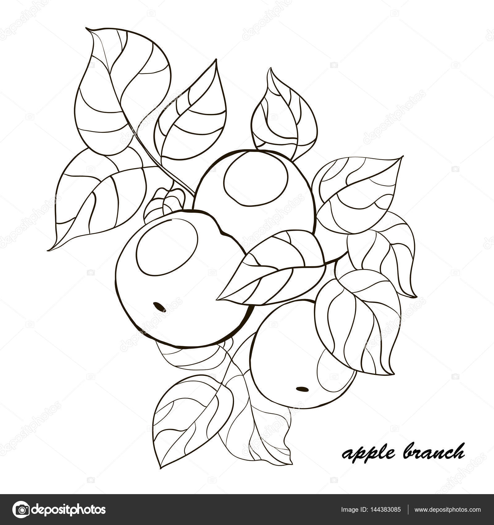 1600x1700 Hand Drawn Apple Tree Branch With Fruits And Leaves. Stock