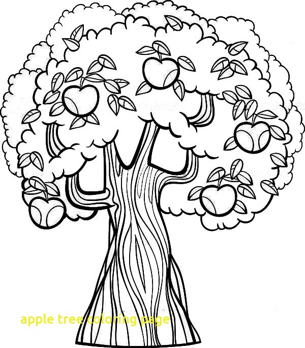 600x684 New Apple Tree Coloring Beautiful Apple Tree Coloring Page