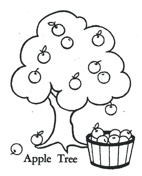 Apple Tree Line Drawing at GetDrawings.com | Free for personal use ...
