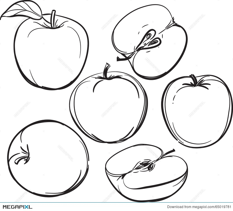 800x724 Apple. Line Drawing Of Apples. On A White Background. One Color
