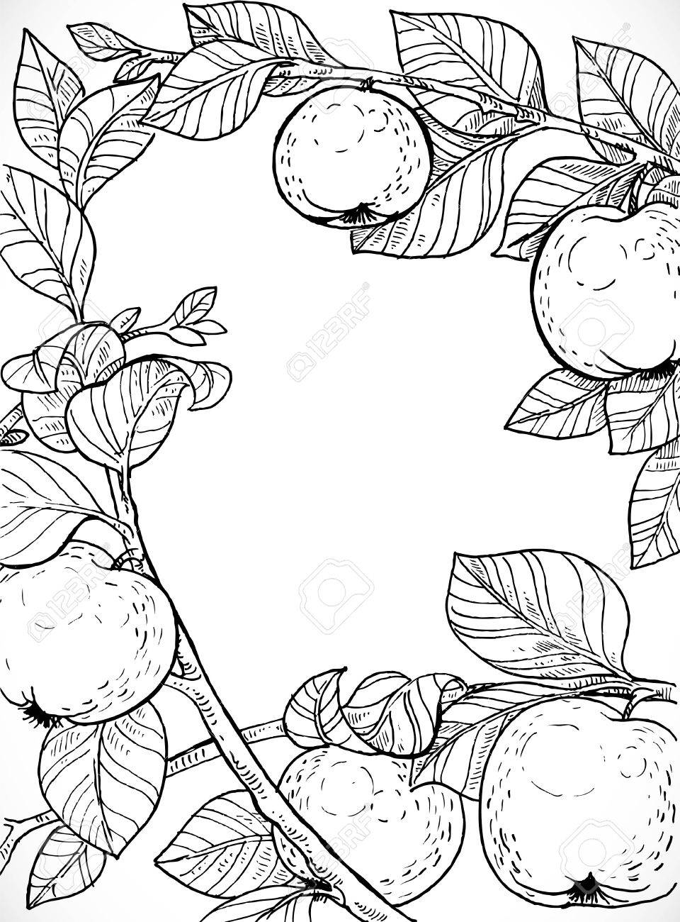 960x1300 Black And White Drawing Of Branches With Apples And Leaves Royalty
