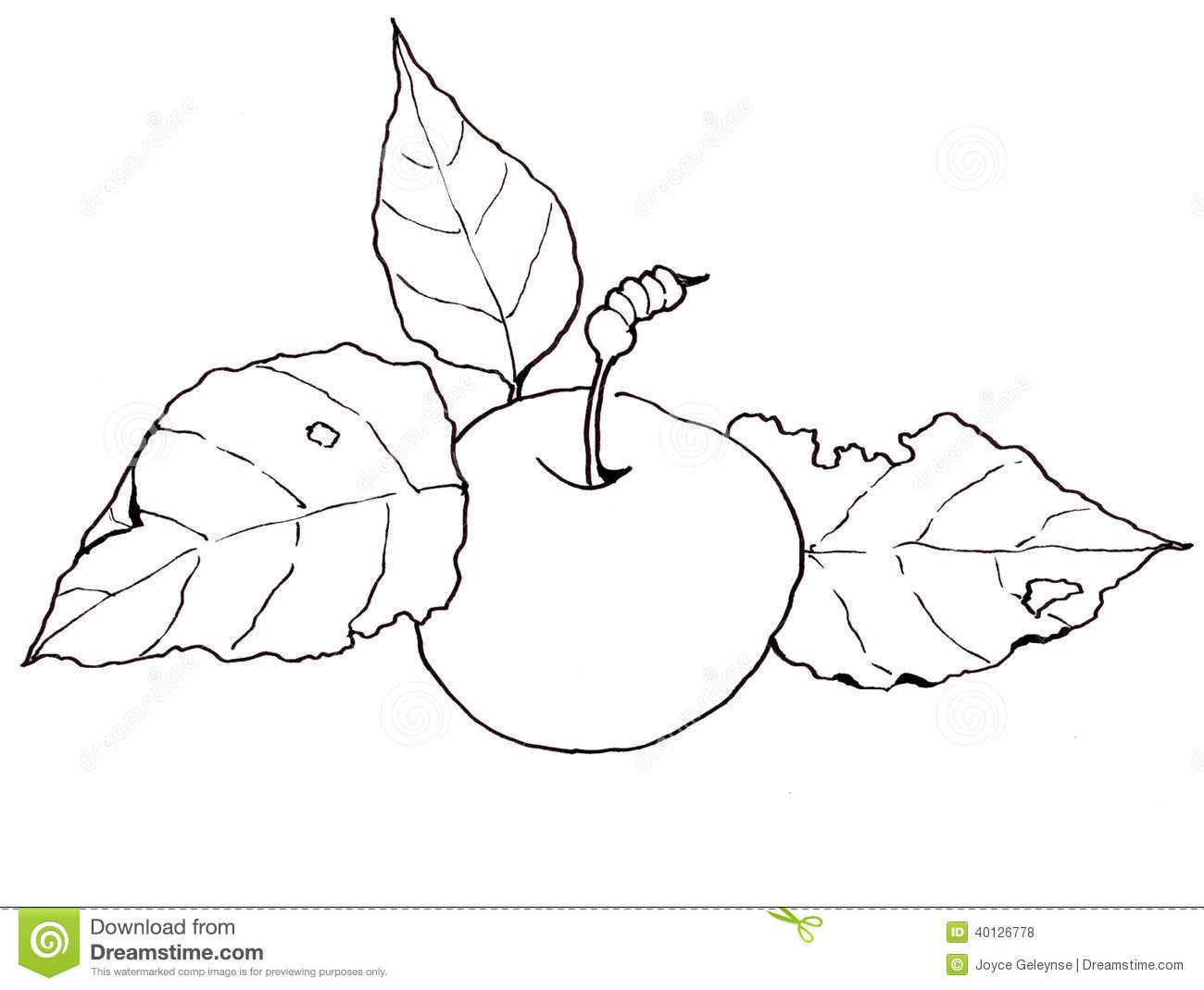 1300x1070 Drawn Apple Apple Leaf