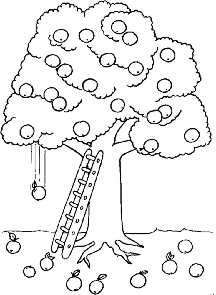 734x1000 Apple Tree Coloring Sheet Page Picture Pictures