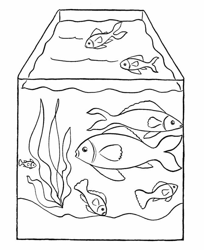 670x820 The Best Fish Tank For Kids Ideas On Fish Tank