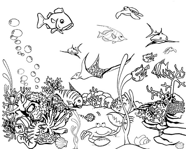 fish sketches for coloring pages - photo#26