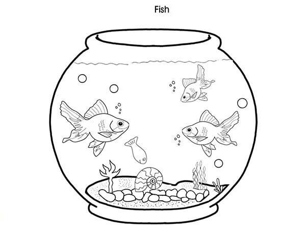 600x450 Coloring Pages Fish Tank. Coloring Page Fish Tank Fish Tank