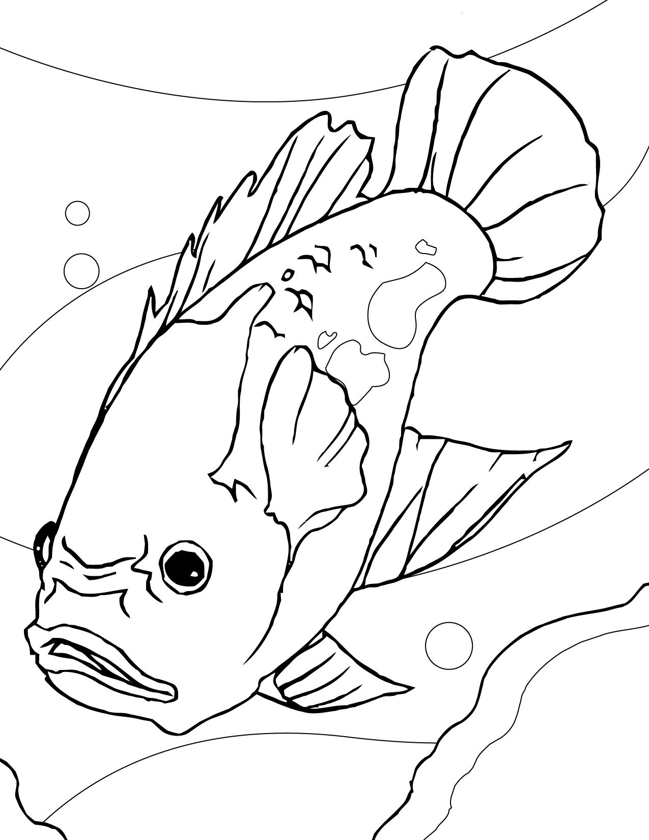 Aquarium Fish Drawing at GetDrawings | Free download
