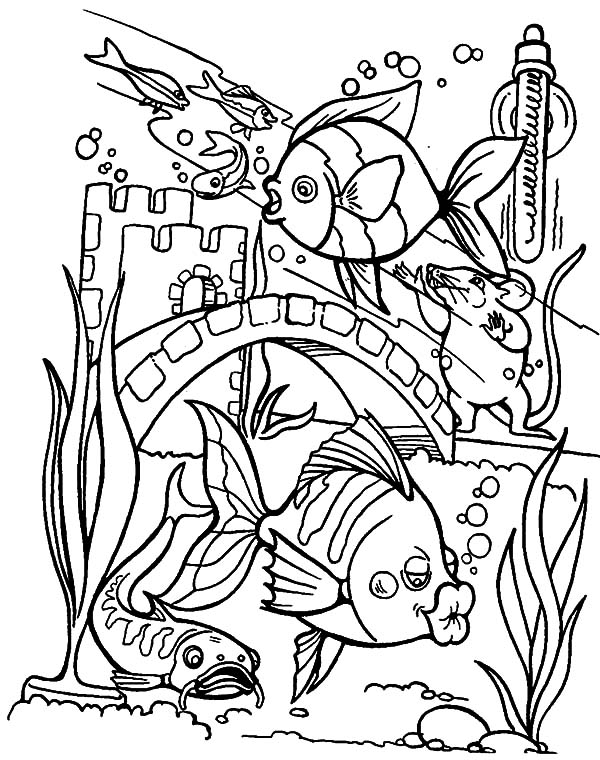 600x760 Tropical Fish Kissing Aquarium Glass Wall Coloring Pages