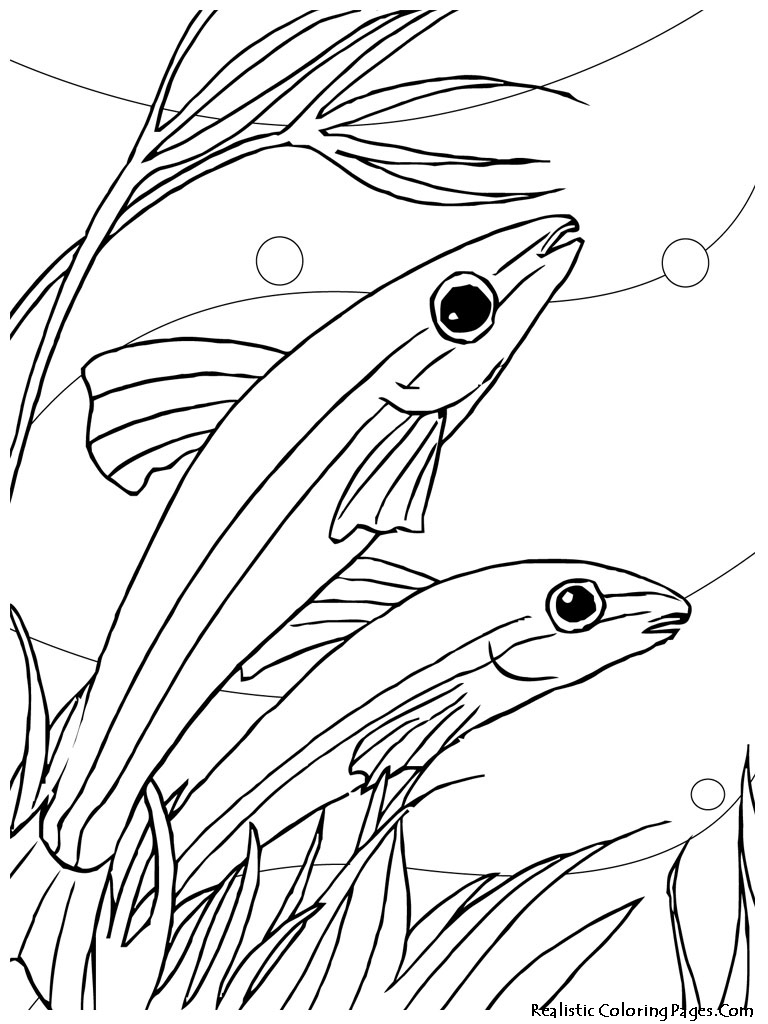 Aquarium Fish Drawing At Getdrawings Com Free For Personal Use