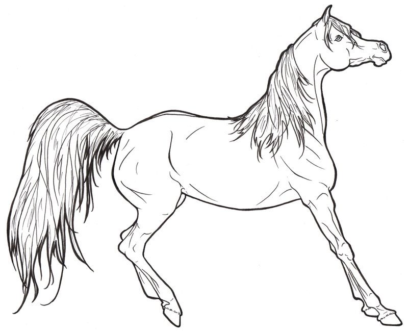 800x653 Arabian Horse Lineart By Requay