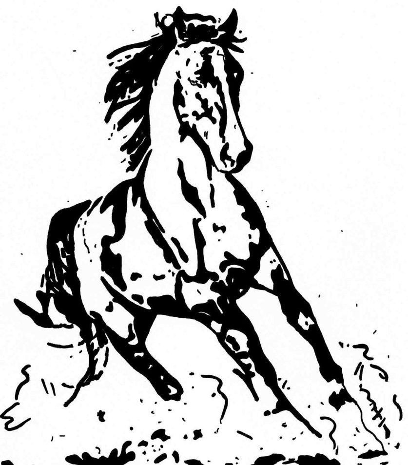 837x954 Arabian Horse By Ladyjart