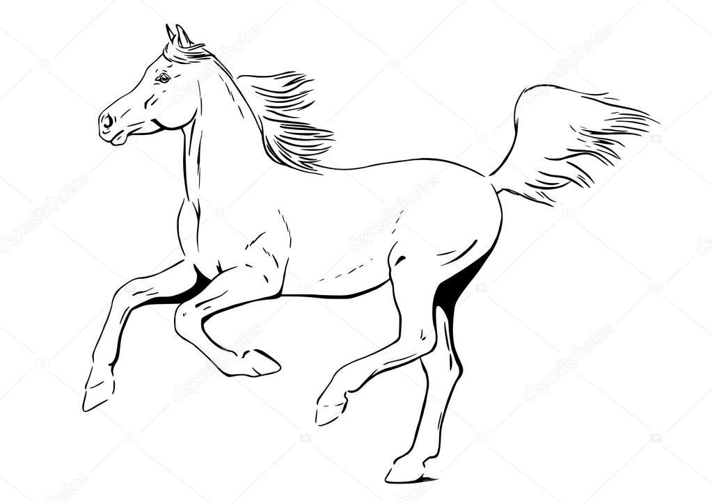 1023x723 Arabian Horse In Gallop Stock Vector Arsanimalium