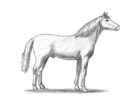 550x425 My Friend Drew This One! Horse Drawings Horse