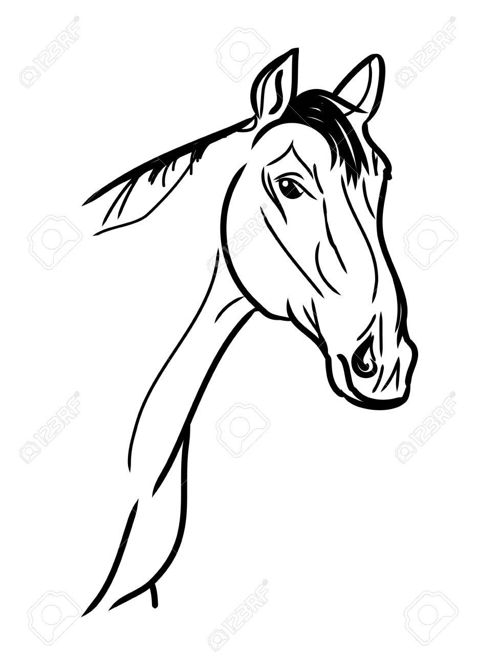 975x1300 Arabian Horse, Horse (Arab, Head). Drawing By Hand. Royalty Free
