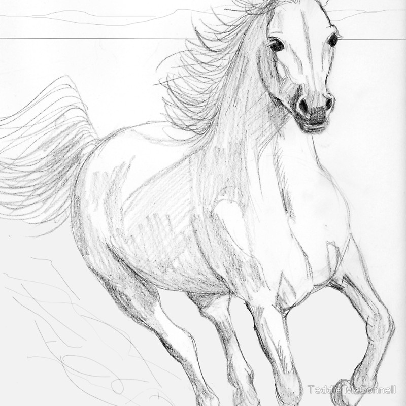 800x800 Running Arabian Horse Pencil Drawing Throw Pillows By Teddie