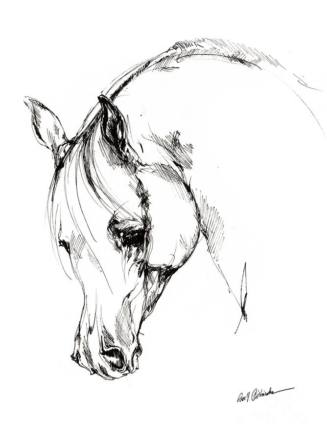 668x900 The Arabian Horse Sketch Sketches, Horse And Horse Art