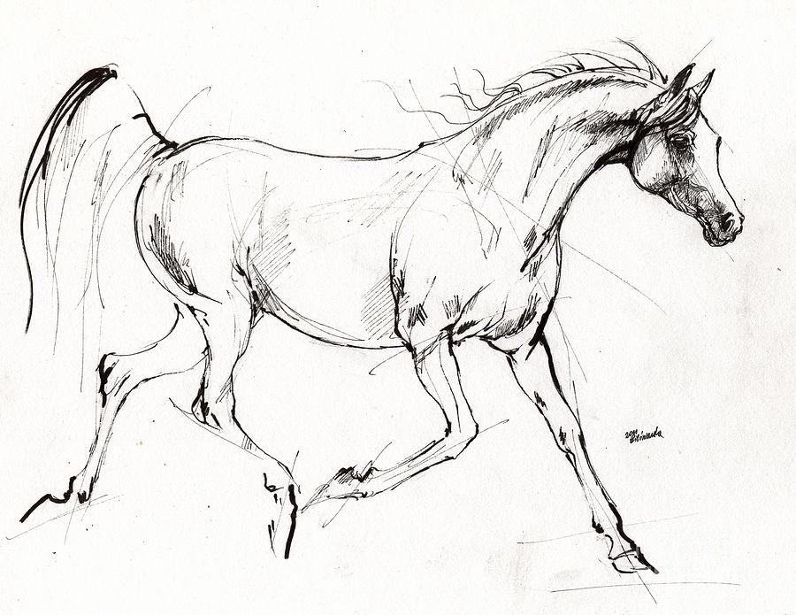900x695 Trotting Arabian Horse Quick Sketch Drawing By Angel Ciesniarska