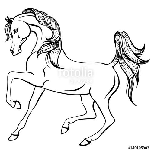 500x500 Vector Outline Illustration Of Beautiful Arabian Horse Stock
