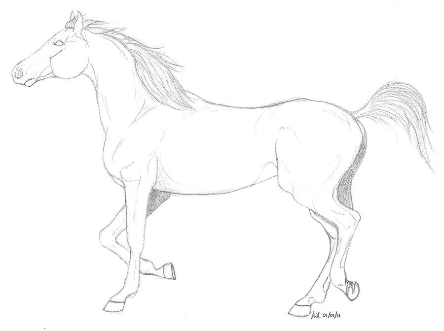 900x672 Arabian Horse Trotting By Mila 10