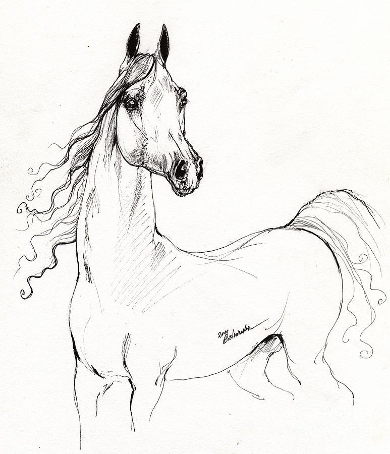 773x900 Arabian Horse Drawing 19 Drawing By Angel Ciesniarska