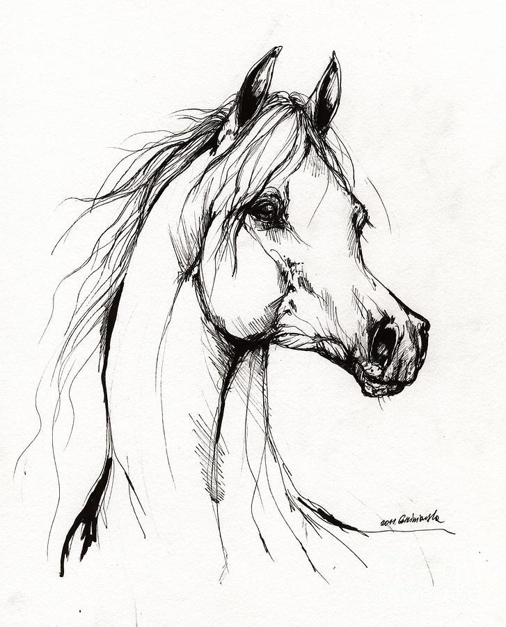 727x900 Arabian Horse Drawing 38 Drawing By Angel Ciesniarska