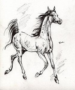 250x300 Arabian Horse Drawings