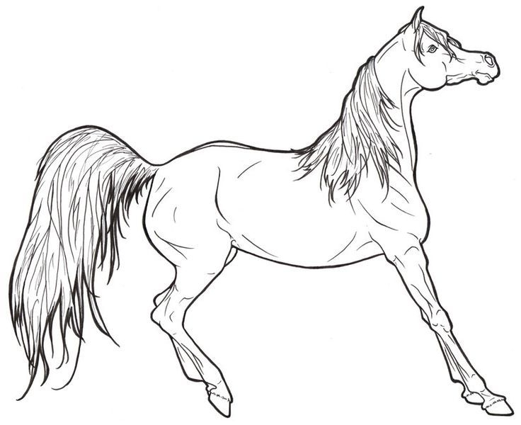736x600 Arabian Horse Head Coloring Page