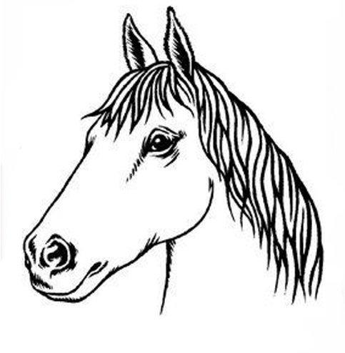 483x495 Arabian Horse Head Outline