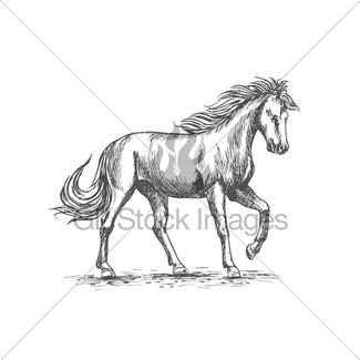 325x325 Horse Head Sketch Of Black Arabian Stallion Gl Stock Images