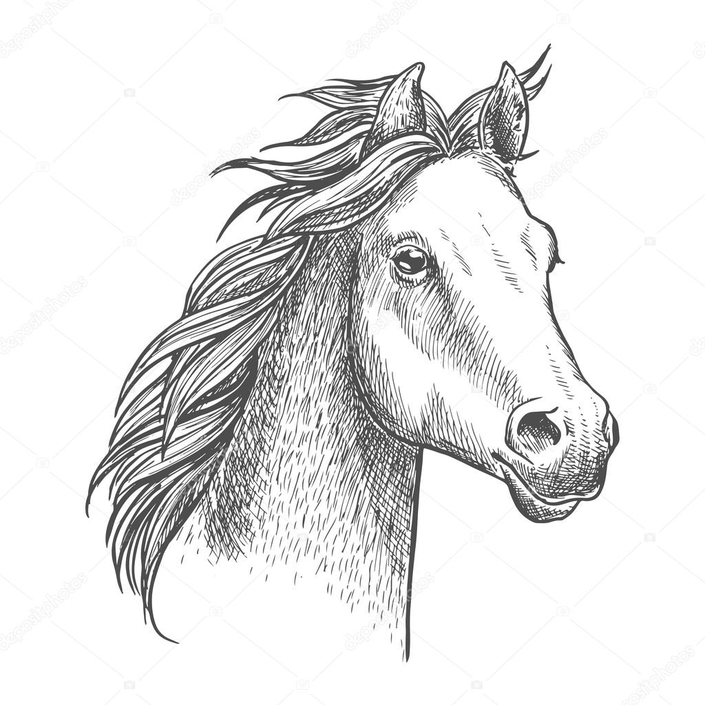 1024x1024 Lively Little Horse Of Arabian Breed, Sketch Style Stock Vector