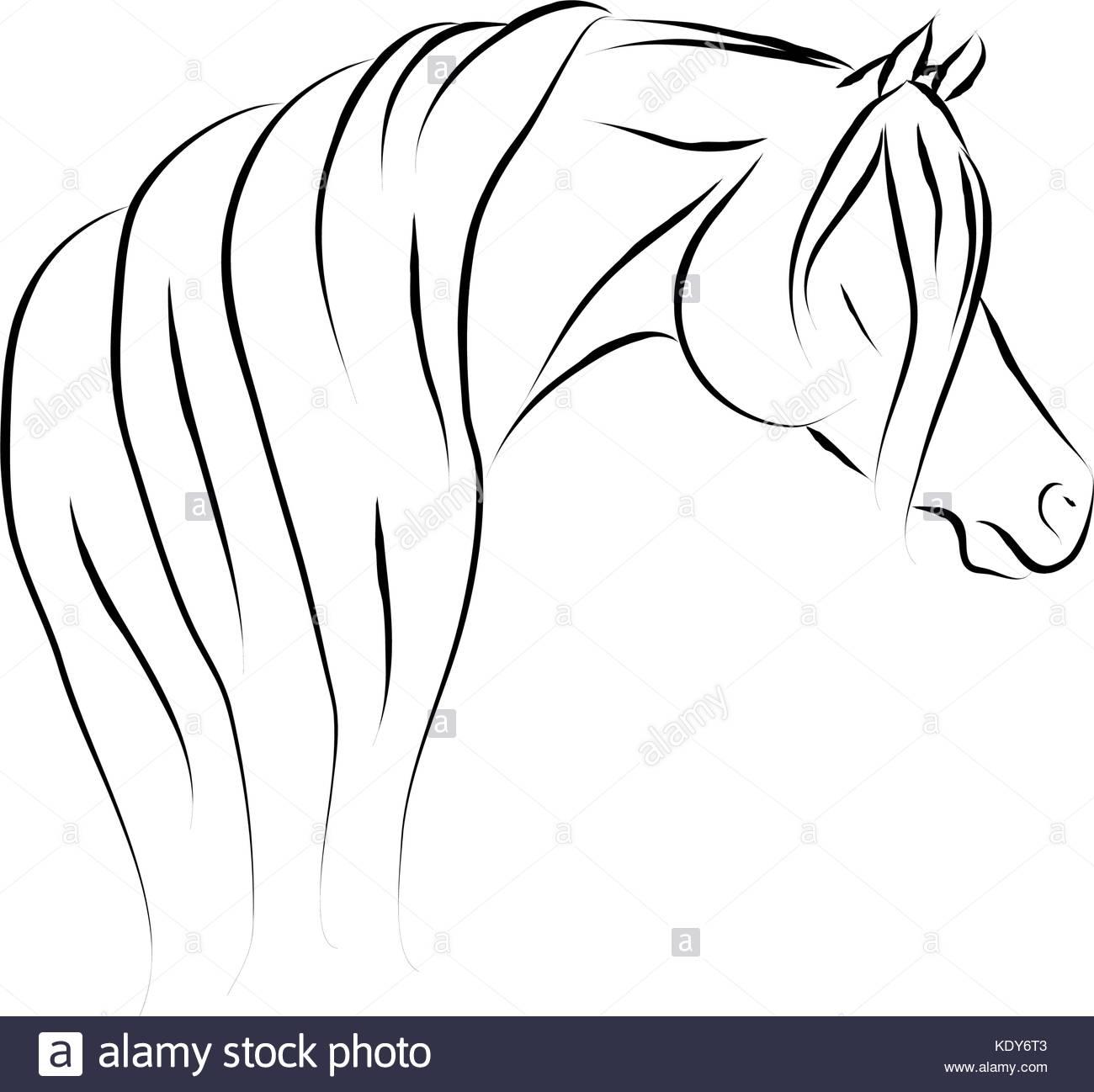1300x1298 Purebred Arabian Horse Stock Vector Images