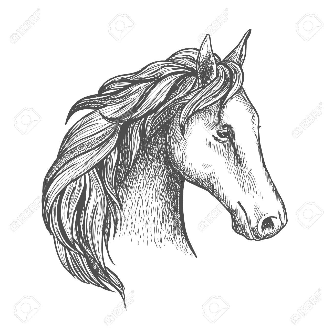 1300x1300 Sketched Horse Head Icon With Purebred Stallion Of Arabian Breed