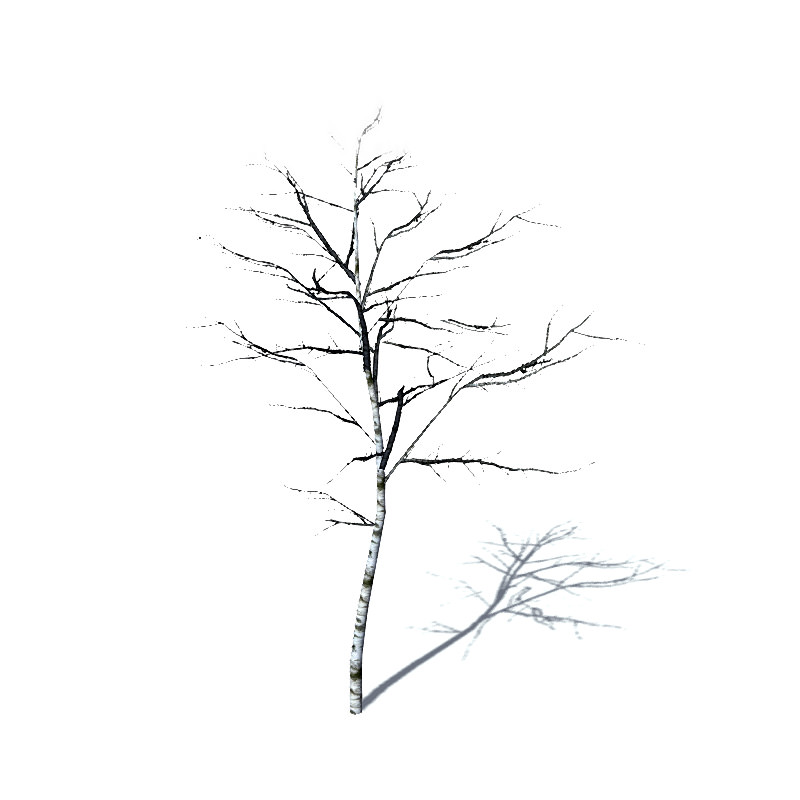 Architectural Tree Drawing