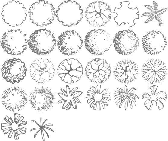 557x466 landscape architecture tree drawings best landscape