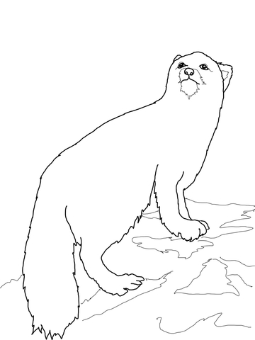 360x480 Arctic Fox Coloring Page Free Printable Coloring Pages