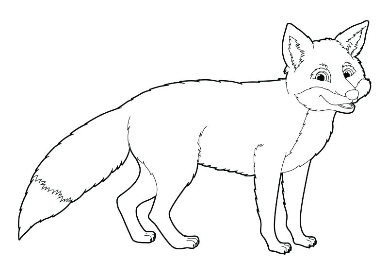 800x572 Arctic Coloring Pages