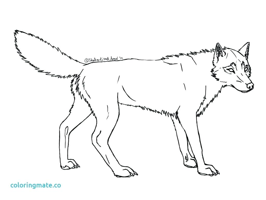 Arctic Fox Drawing at GetDrawings.com | Free for personal use Arctic ...
