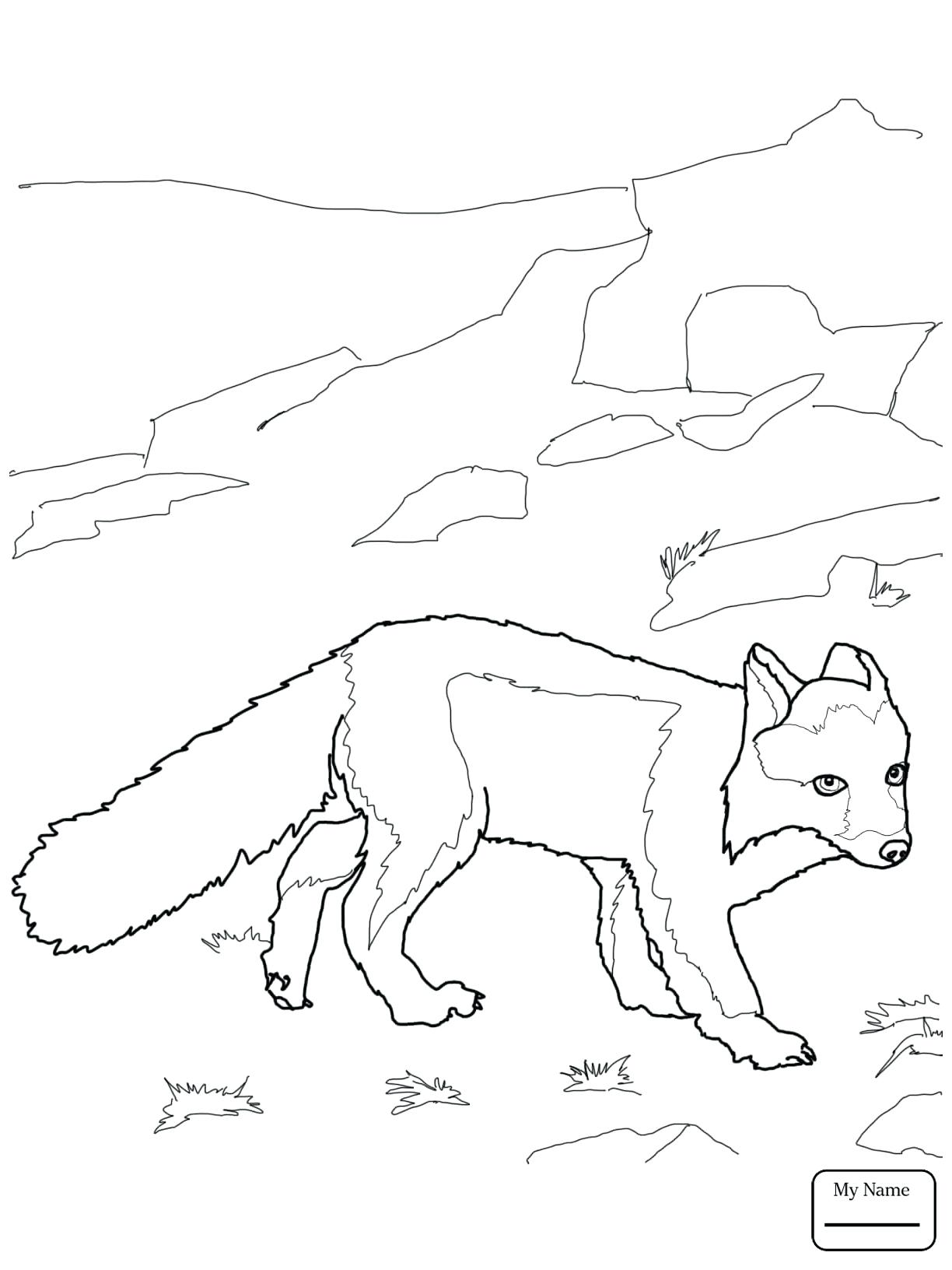 1224x1632 Coloring Arctic Fox Coloring Pages