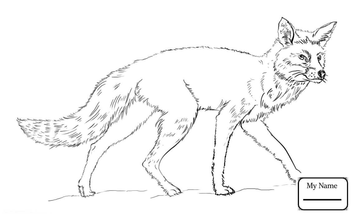 1134x690 Mammals Arctic Fox Foxes Coloring Pages