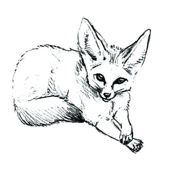 600x592 Arctic Fox Coloring Page How To Draw Desert Pages Baby 2 Animal