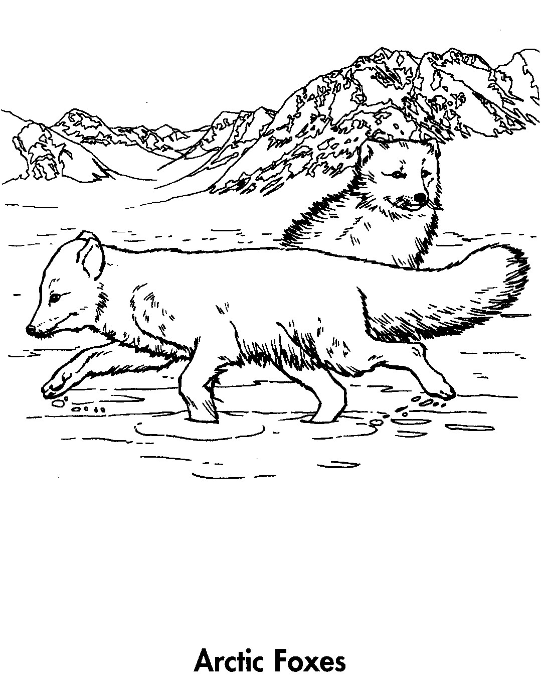 1079x1375 Arctic Fox Clipart Colouring Page