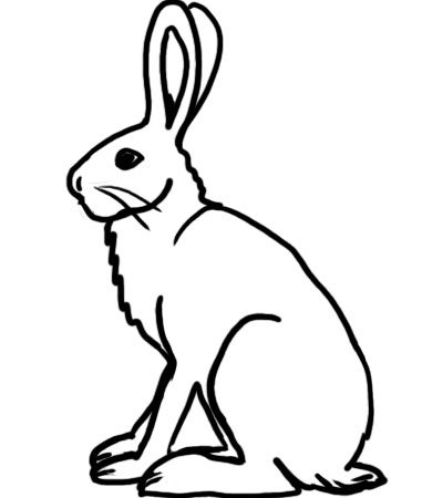 381x450 Arctic Hare Coloring Pages