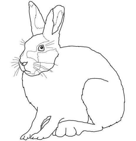 462x480 Arctic Hare Coloring Page Free Printable Coloring Pages