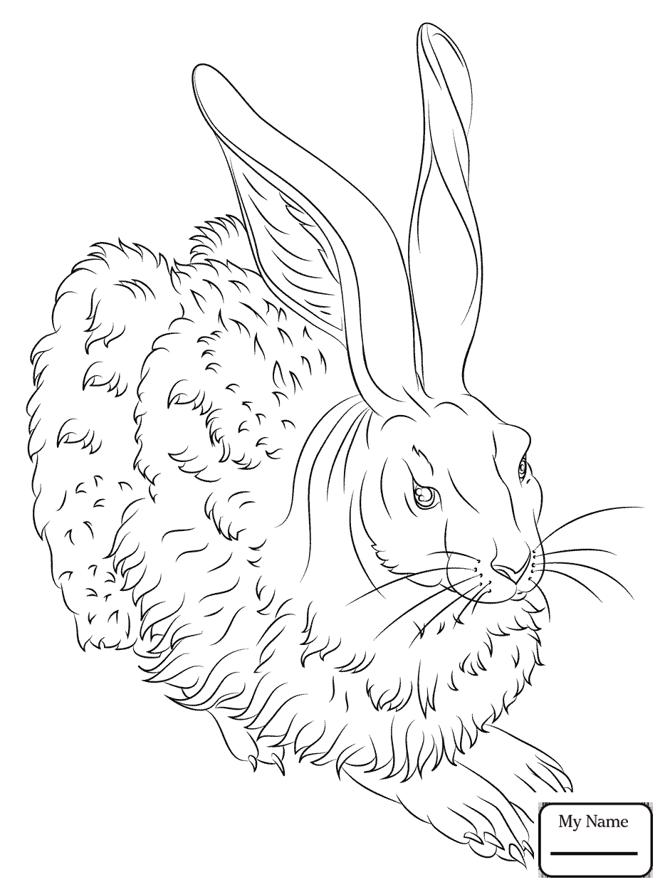 934x1253 Arctic Hare Mammals Hares Coloring Pages For Kids