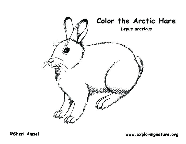 792x612 Arctic Coloring Pages Animal Jam Arctic Fox Coloring Pages